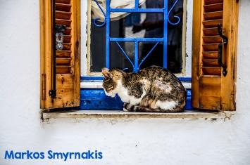 dsc_0547 cat