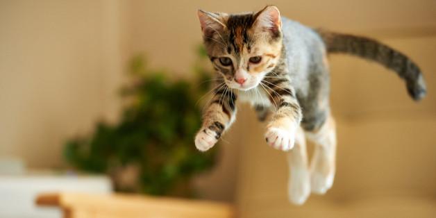 Dating για τους λάτρεις της γάτας